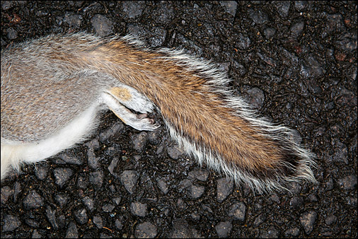 Road kill. Photo © Stephen Shepherd